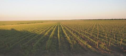 Et cetera winery