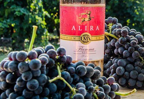 Wino Alira Famma Rose